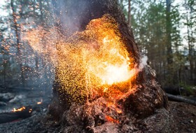 (تصاویر) آتش گرفتن درختی در جنگلی در یاکوتیا در روسیه