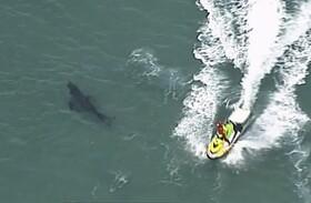 (تصاویر) حمله کوسه ها به سواحل استرالیا که موجب کشته شدن یک مرد شصت ساله  شد