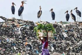 (تصاویر) لک لک ها در یک مرکز زباله بزرگ در هند به دنبال غذا