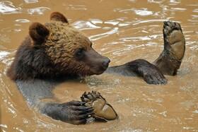 (تصاویر) خرسی در حال بازی در باغ وحشی