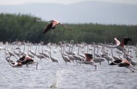 (تصاویر) دریاچه ای در ترکیه که میزبان پرندگان مهاجر است