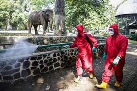 (تصاویر) ضد عفونی کردن باغ وحش جاکارتا در اندونزی