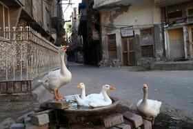 (تصاویر) محله ای در لاهور که به دلیل قرنطینه خلوت شده