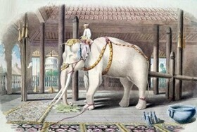 چگونگی بهتر زندگی کردن با تئوری فیل سفید!