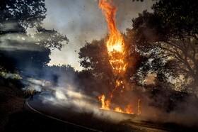 (تصاویر)آتش سوزی در کالیفرنیای آمریکا