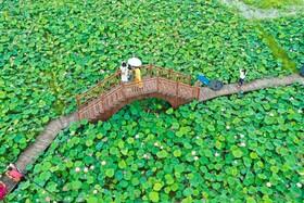 (تصاویر) پلی توریستی در کوانزو در چین