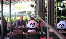 (تصاویر) خرس های پاندا در ترکیه در رستورانی برای حفظ فاصله فیزیکی