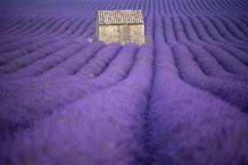 (تصاویر) مزرعه استوخوددوس در فرانسه