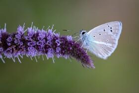 (تصاویر) پروانه ای در حال کار روزنانه