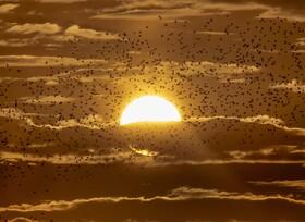 (تصاویر) غروب آفتاب طلایی