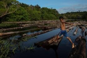 (تصاویر) قطع غیرقانونی درختان در منطقه آمازون در برزیل و کودکی در میان الوارهای بریده شده توقیف شده از سوی مقامات دولتی بازی می کند