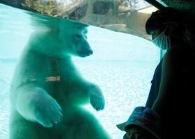 (تصاویر) خرس قطبی در باغ وحشی در مکزیک