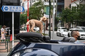 (تصاویر) خیابانی در توکیو