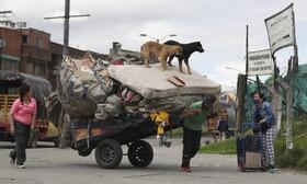 (تصاویر) کارگری که زباله های قابل بازیافت را جمع آوری می کند و سگ هایی که در حال بازی گوشی هستند در بوگوتای کلمبیا