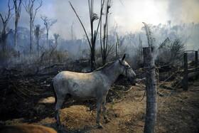 آتش سوزی در جنگل های استوایی در برزیل
