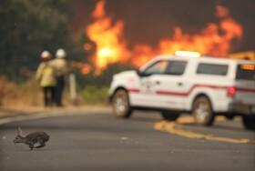 آتش سوزی در کالیقرنیا و خطر برای جانوران وحشی